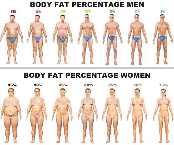 体脂肪が燃えやすいカラダをつくる